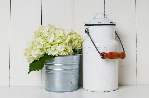 milk can and white hydrangea Stock photo © manera