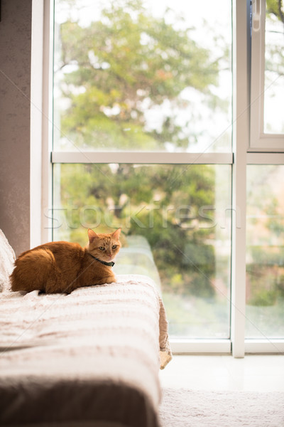 Lovely ginger cat on a sofa by the window Stock photo © manera