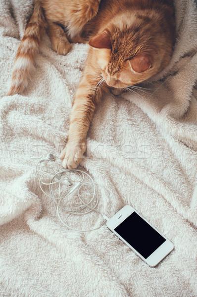 cat and smartphone Stock photo © manera