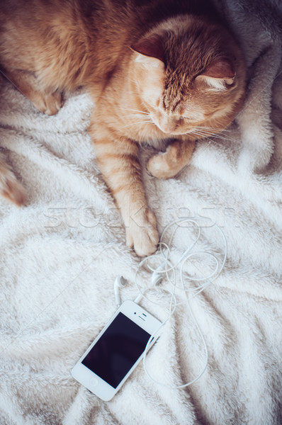 Chat smartphone grand rouge mensonges soft Photo stock © manera