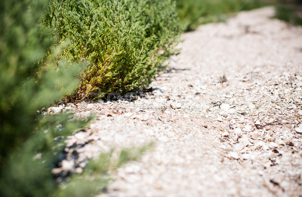 grass and sandy footpath Stock photo © manera