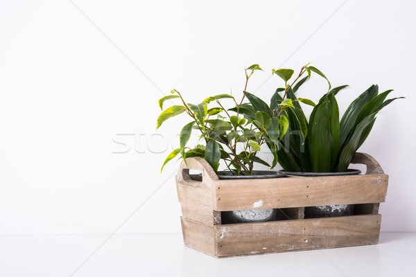 Home green plants in wooden box Stock photo © manera