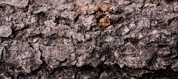Fa ugatás textúra száraz fatörzs makró Stock fotó © manera