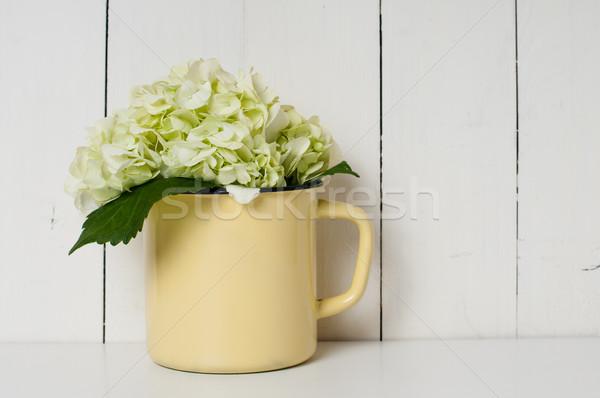 White hydrangea Stock photo © manera