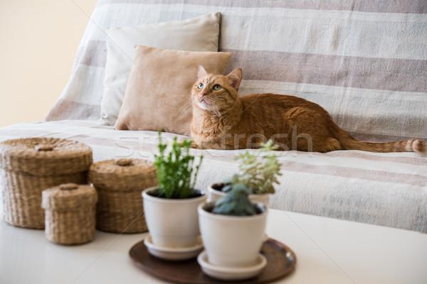 Lusta gyömbér macska fektet kanapé nagy Stock fotó © manera
