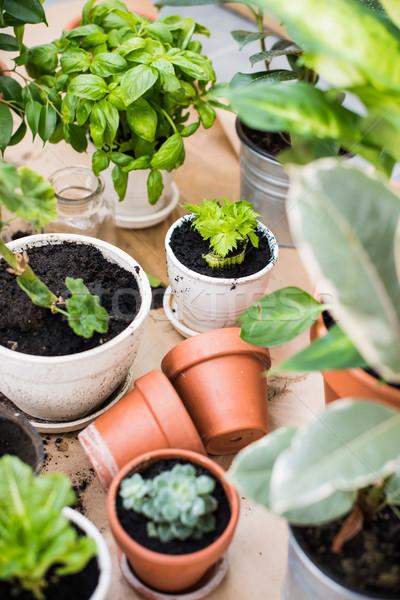Erkély kert természetes növények zöld városi Stock fotó © manera