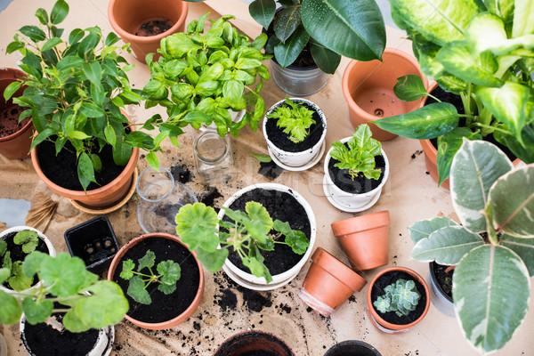 Varanda jardim naturalismo plantas verde urbano Foto stock © manera