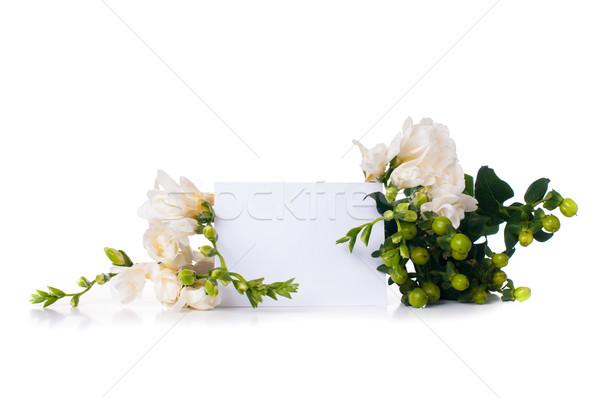 üres kártya köteg friss virágzó fehér izolált Stock fotó © manera
