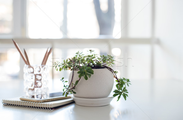 Home plant, business notepad and smartphone in backlight  Stock photo © manera