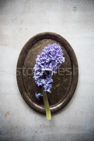 Purple hyacinth flowers in vintage tray Stock photo © manera