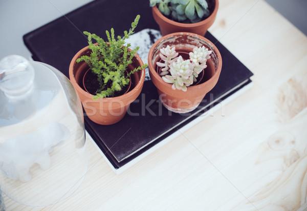 green plants on table Stock photo © manera
