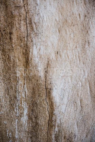 Ağaç havlama çatlaklar doku doğal soyut Stok fotoğraf © manera