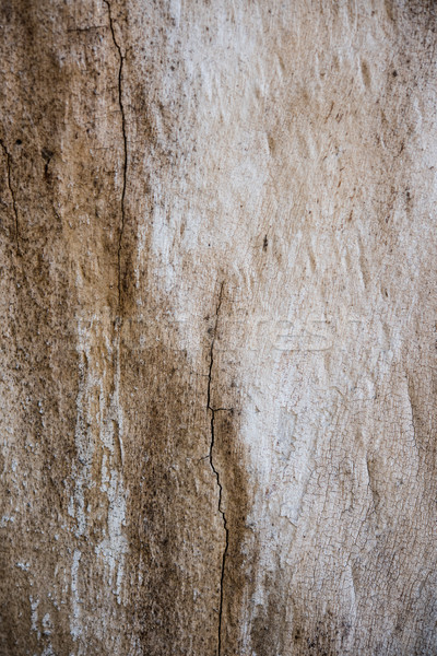 árbol corteza grietas textura naturales resumen Foto stock © manera