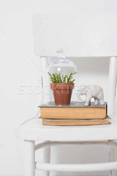 Elegáns lakberendezés otthon növény harang bögre Stock fotó © manera