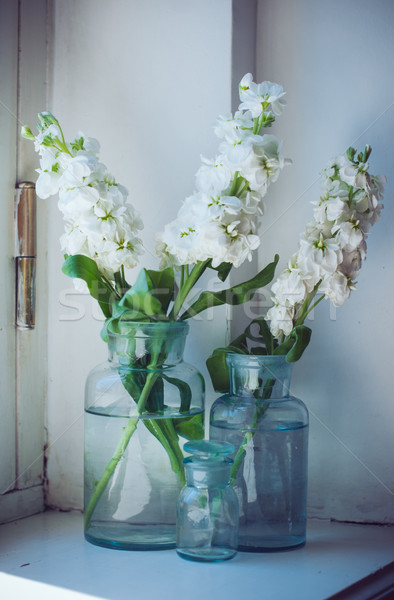 matthiola flowers  Stock photo © manera