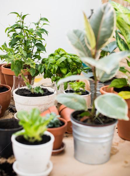 Foto stock: Varanda · jardim · naturalismo · plantas · verde · urbano
