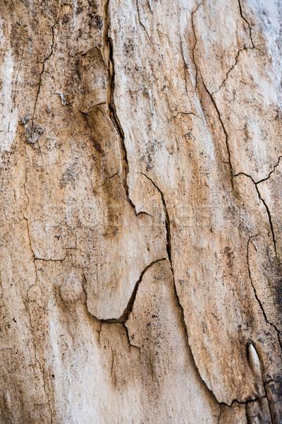 Boom schors scheuren textuur natuurlijke abstract Stockfoto © manera