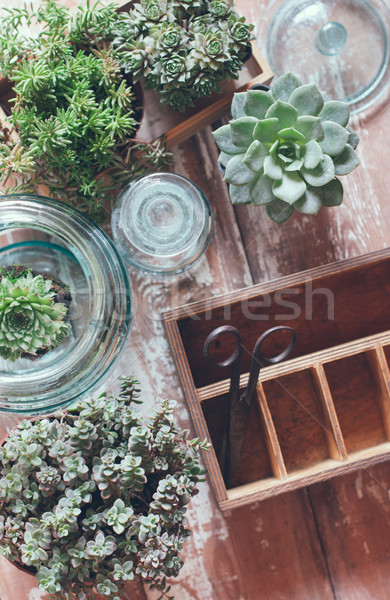 Ház növények zöld öreg fából készült doboz Stock fotó © manera
