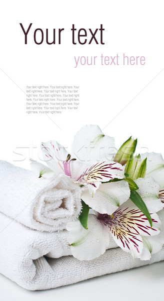 Spa and hygiene concept, isolated, ready template Stock photo © manera