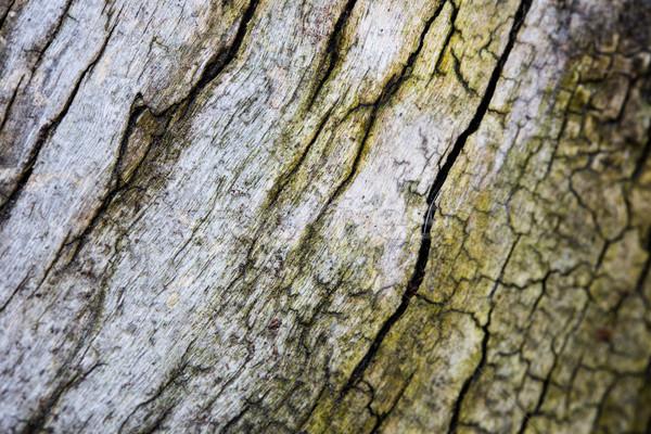 Stok fotoğraf: Ağaç · havlama · çatlaklar · doku · doğal · soyut