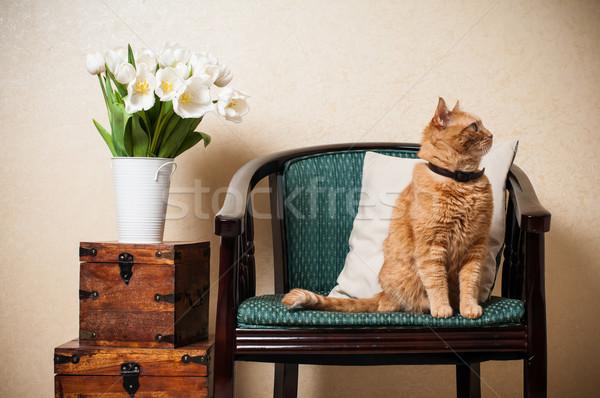 Home interior, cat  Stock photo © manera