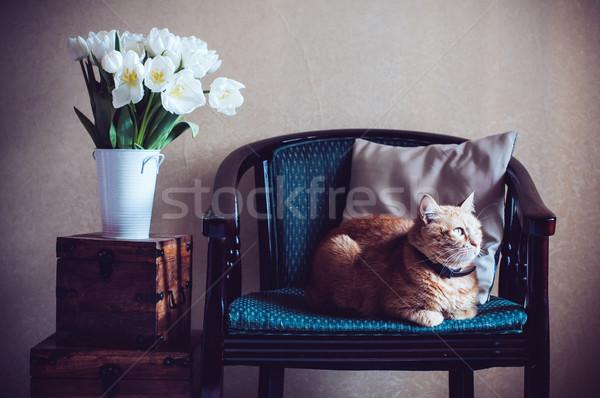 Stok fotoğraf: Ev · iç · kedi · oturma · koltuk · duvar