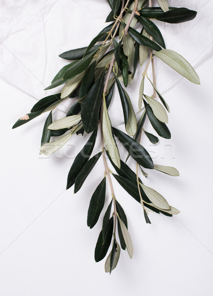 Stock photo: Olive branches on white tabletop