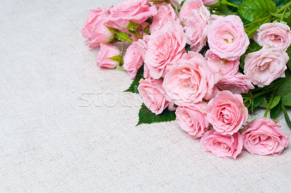 Nedves rózsaszín rózsák szürke vászon szövet Stock fotó © manera