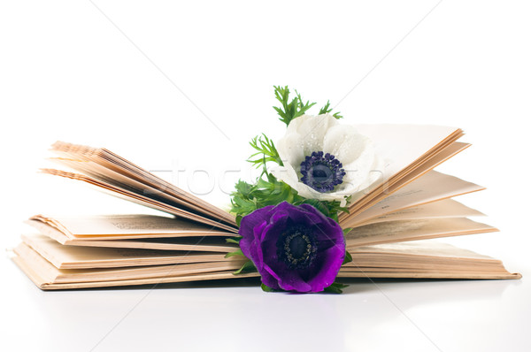 Two anemone flowers in an old book Stock photo © manera