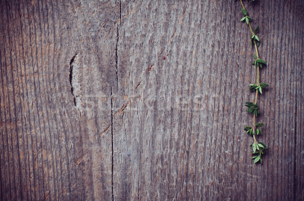 thyme herb Stock photo © manera