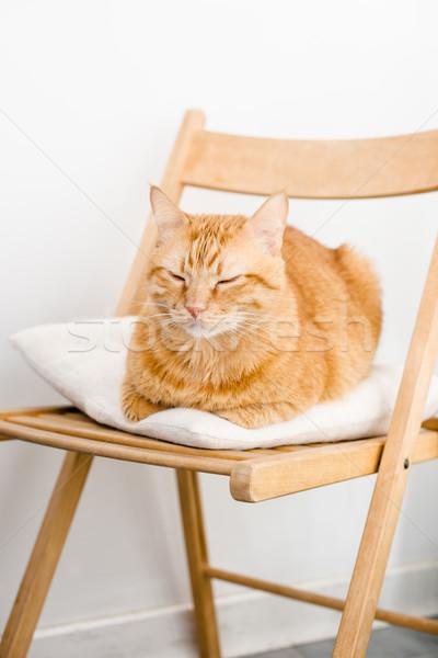 Zenzero cat grande grasso sedia Foto d'archivio © manera