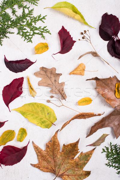 カラフル 紅葉 白 ホワイトボード 秋 自然 ストックフォト © manera