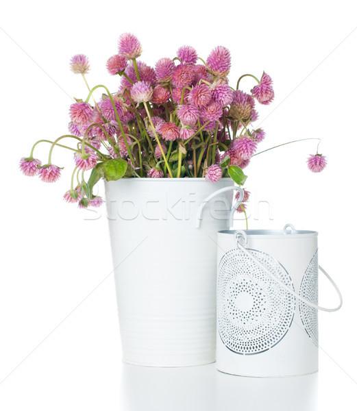 Buquê rosa flores silvestres engraçado confuso Foto stock © manera
