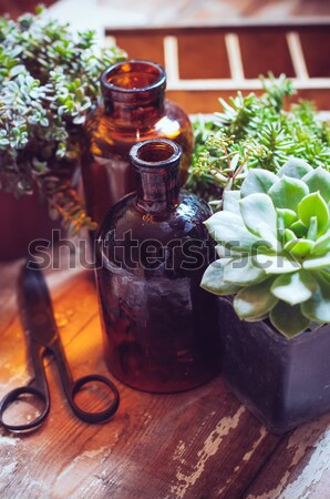 House plants and bottles Stock photo © manera