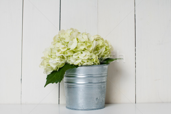 Virágok fehér virág konzervdoboz edény fehér tábla Stock fotó © manera