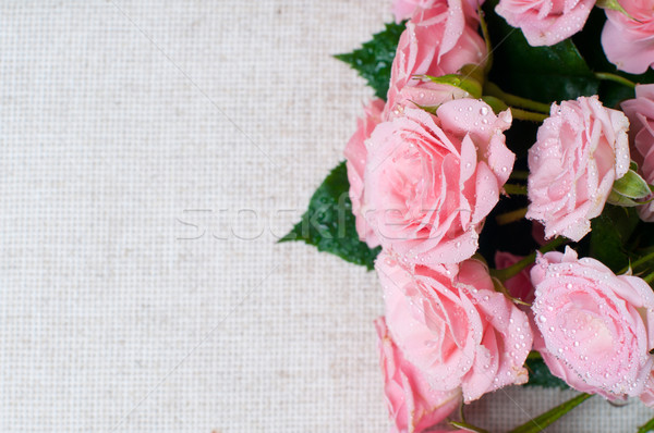wet pink roses on a gray linen fabric Stock photo © manera