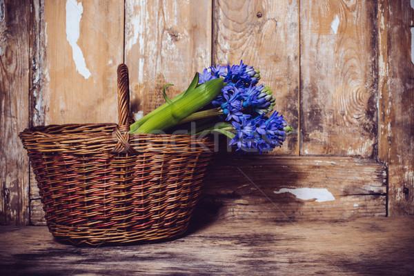Jácint klasszikus fa deszka tavaszi virágok ajándék kék Stock fotó © manera