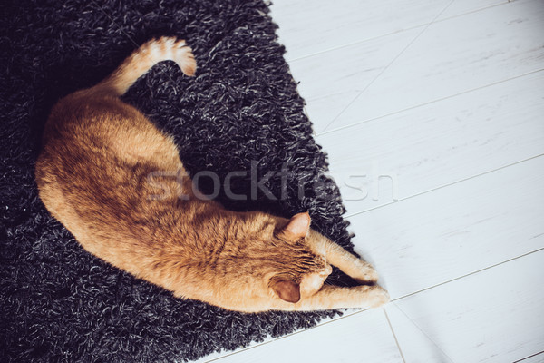 cat lying on a carpet  Stock photo © manera