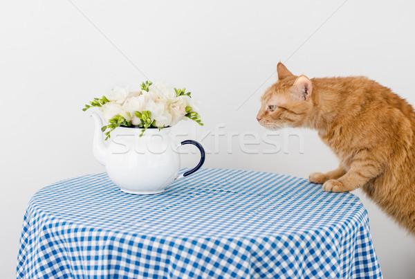 Cat and flowers Stock photo © manera