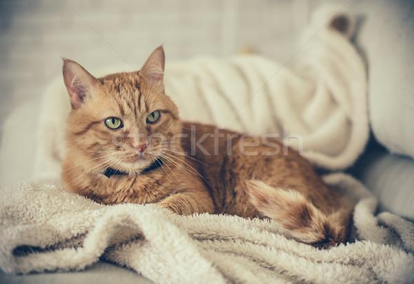 Gengibre gato grande casa fofo relaxar Foto stock © manera