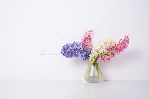 Roxo rosa jacinto flores branco isolado Foto stock © manera