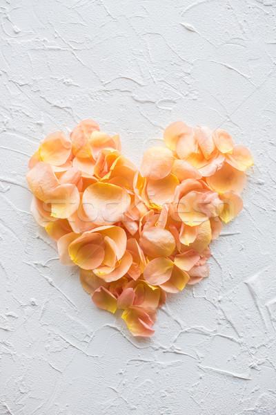 中心 バラの花びら 白 ストックフォト © manera