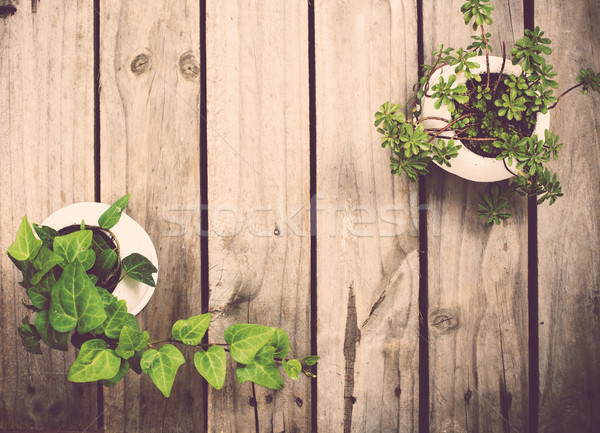 Natural green plants on an old vintage wooden board Stock photo © manera