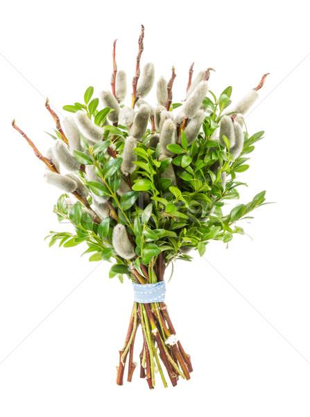 киска ива Вербное воскресенье традиционный букет Сток-фото © manfredxy