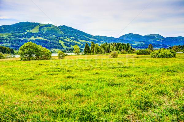 Krajobraz jezioro wody trawy Zdjęcia stock © manfredxy