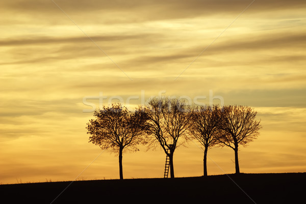 Three lonely trees Stock photo © manfredxy