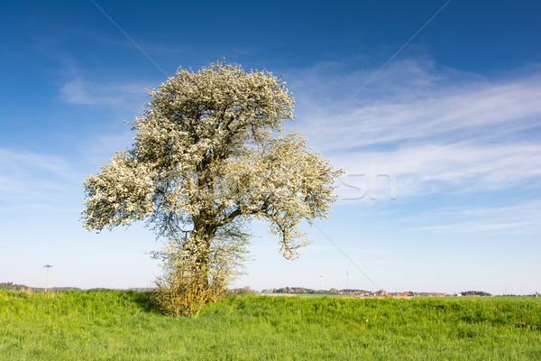 Paisaje floración árbol primavera Foto stock © manfredxy