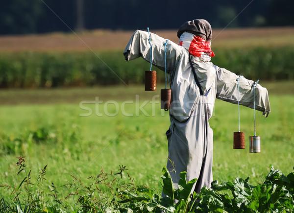 かかし フィールド 野菜 草 男 庭園 ストックフォト © manfredxy