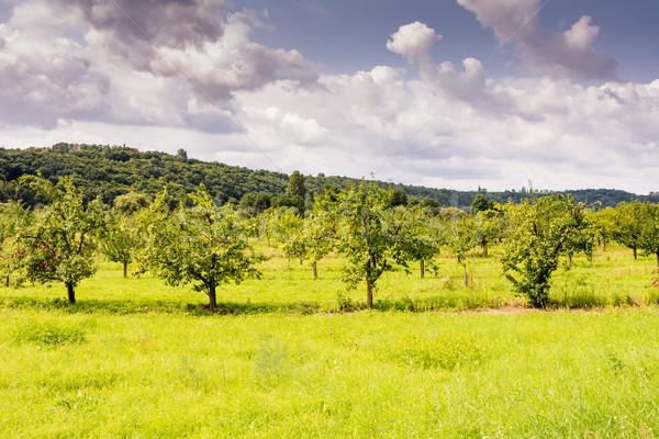 Krajobraz owoców drzew Zdjęcia stock © manfredxy