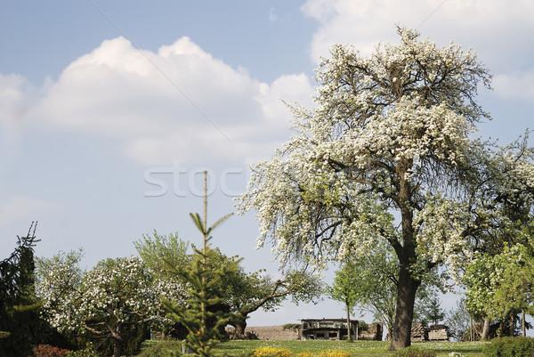 Bloei boom voorjaar schilderachtig Stockfoto © manfredxy